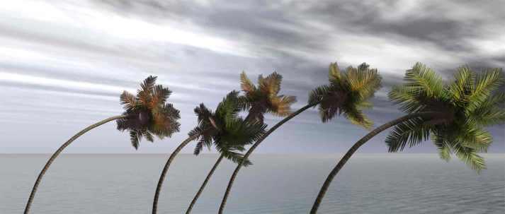 trees litgrit com