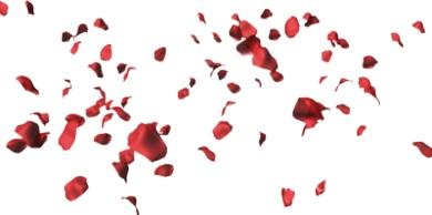 rose-petals-psd60148