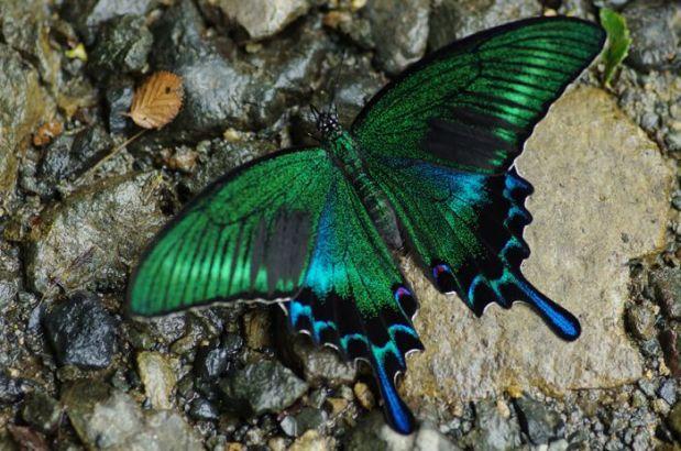 caterpillar_transformation_08